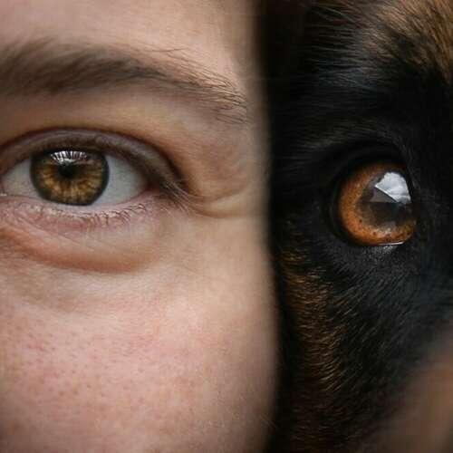 Hundefotografin München - Sylvie Zollinger - Sylvie Zollinger - Fotografen aus Fürstenfeldbruck ★ Preise vergleichen