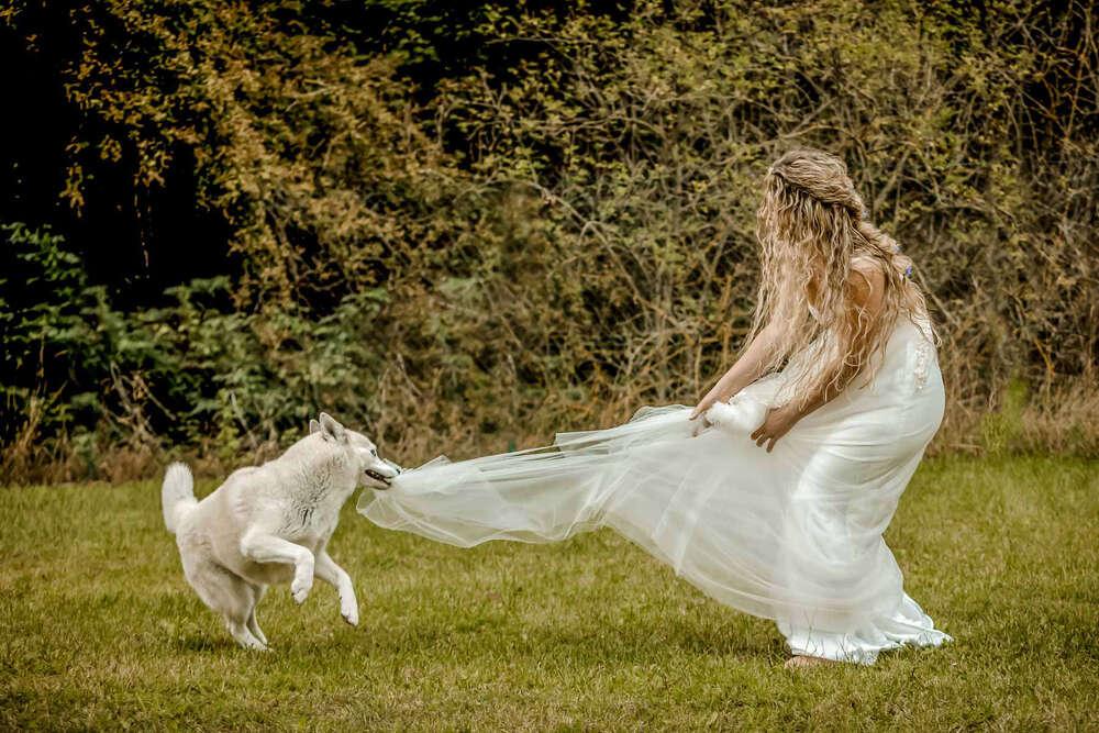 Hund beißt ins Brautkleid /