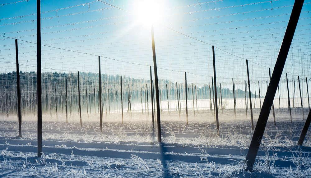 Winter in der Holledau  /