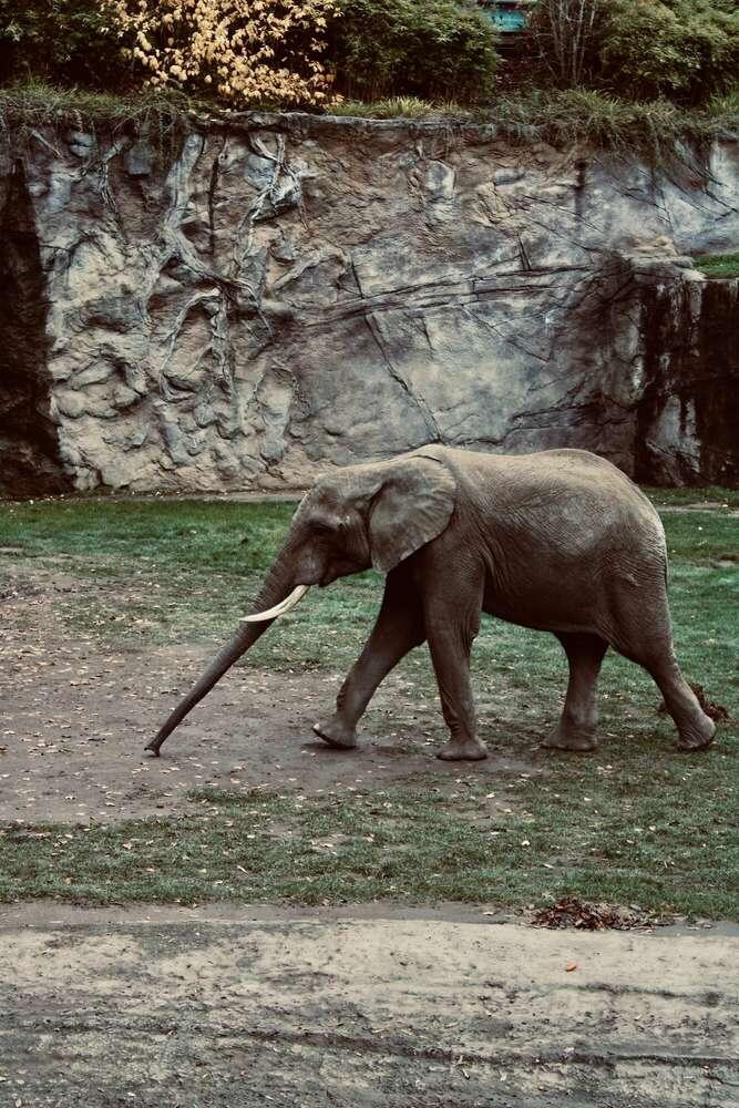 Elefant (Emily .)