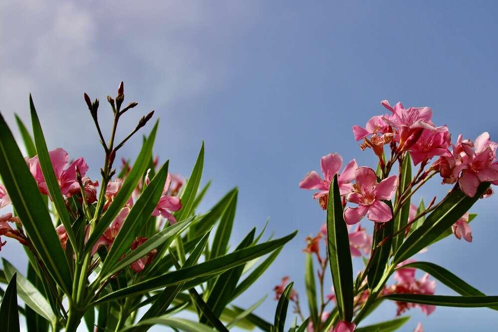 Blumen (Emily .)