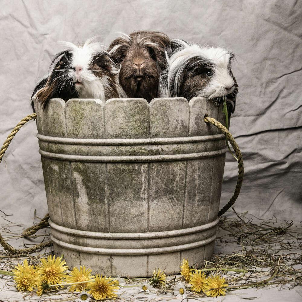 Tiere / Familienmitglied (Studio157 - kreative Fotografie)