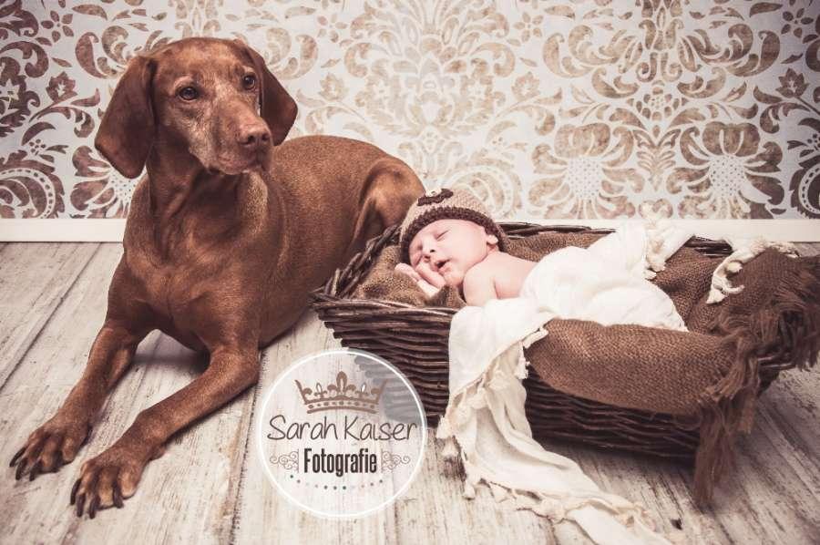 Neugeborene & Tiere (Sarah Kaiser Fotografie)