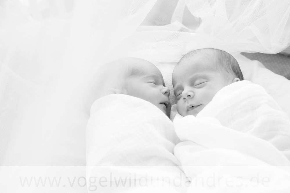 Natürliche Babyfotos / Fotografie vogelwild und andres (Fotografie vogelwild und andres)