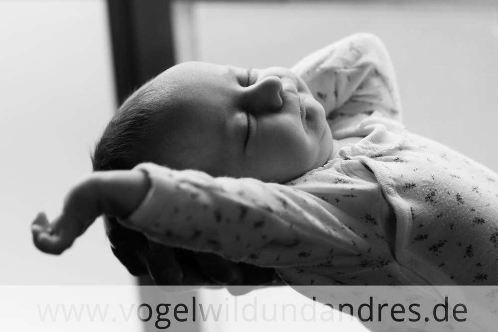 Babyfotos / Fotografie vogelwild und andres (Fotografie vogelwild und andres)