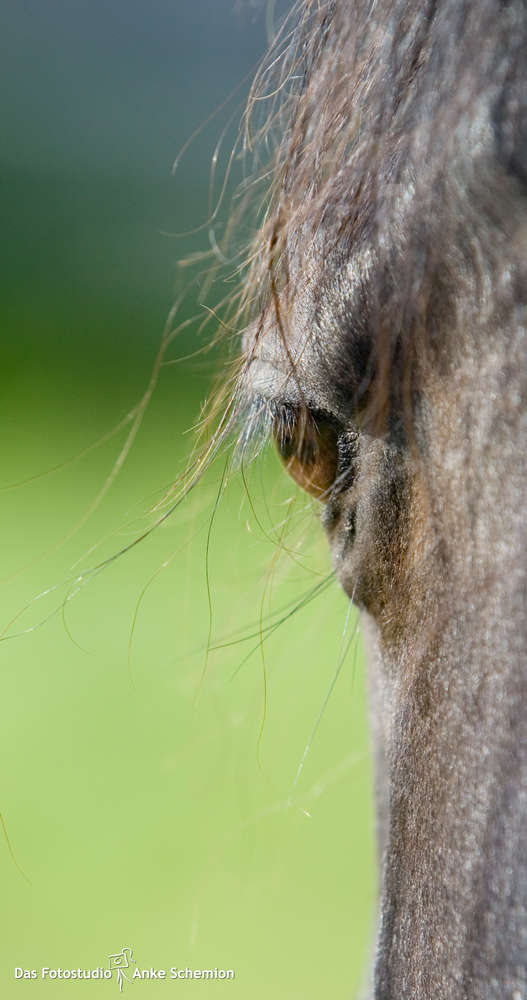 Tierfotografie / © Anke Schemion (Das Fotostudio Anke Schemion)