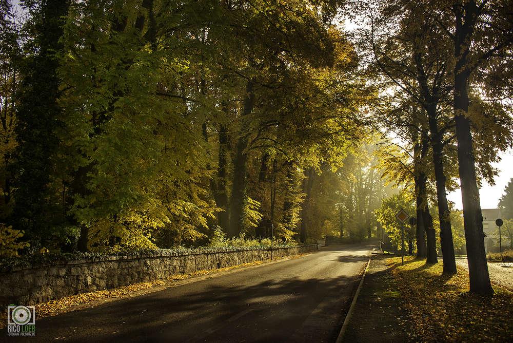 Herbst (Fotograf-Pulsnitz.de)