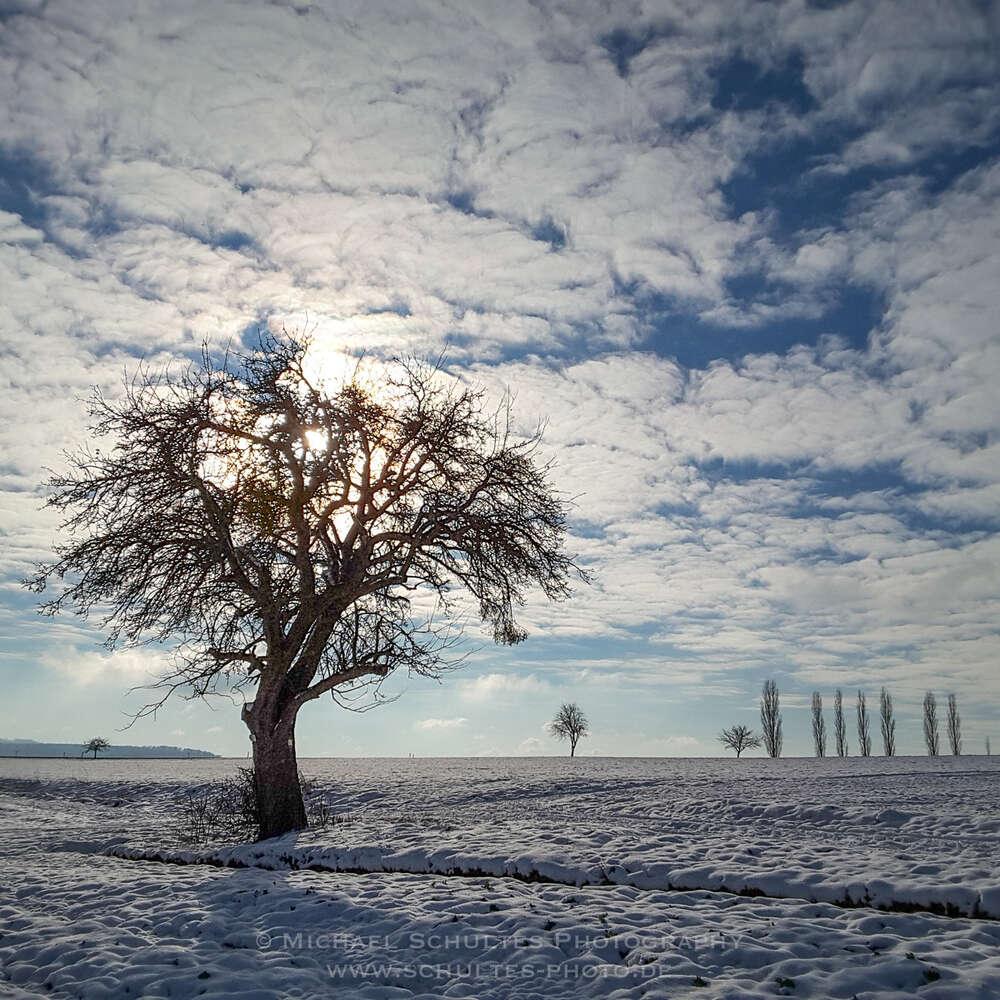 Winterbaum im Gegenlicht /