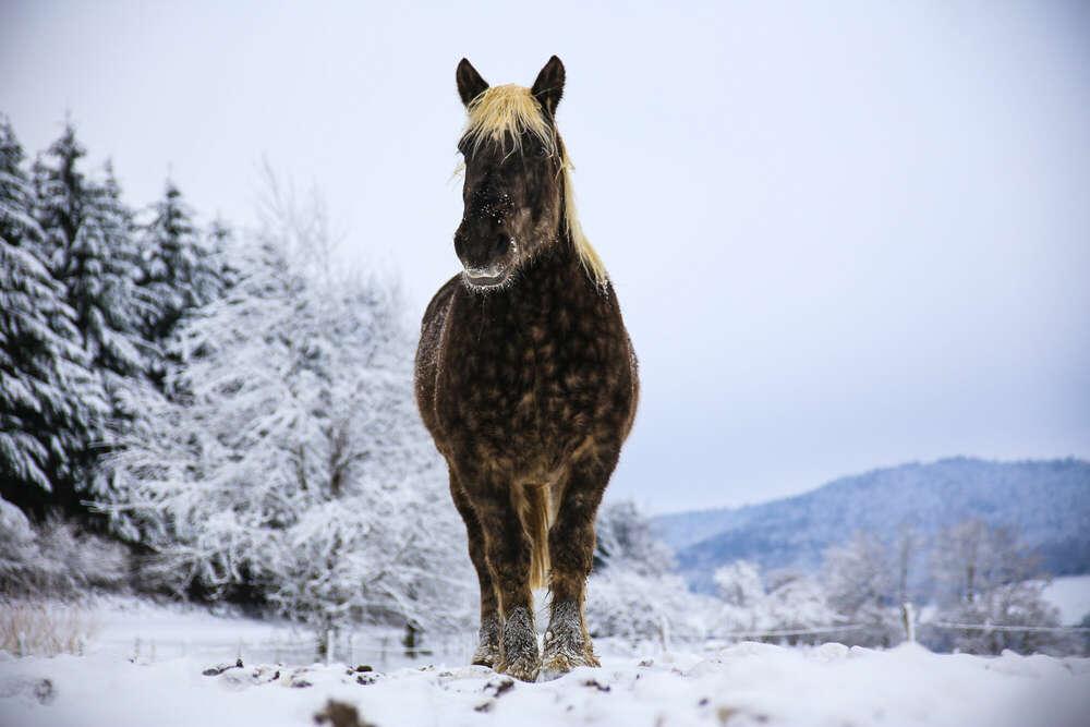 Schneepferd /