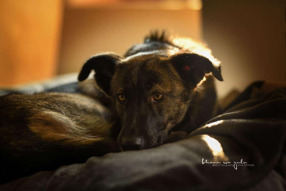 Vader / indoor Hundefotografie, natürliches Licht