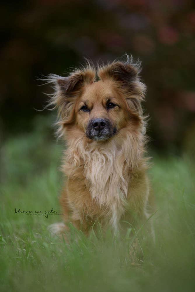 Djambo / Hundefotografie