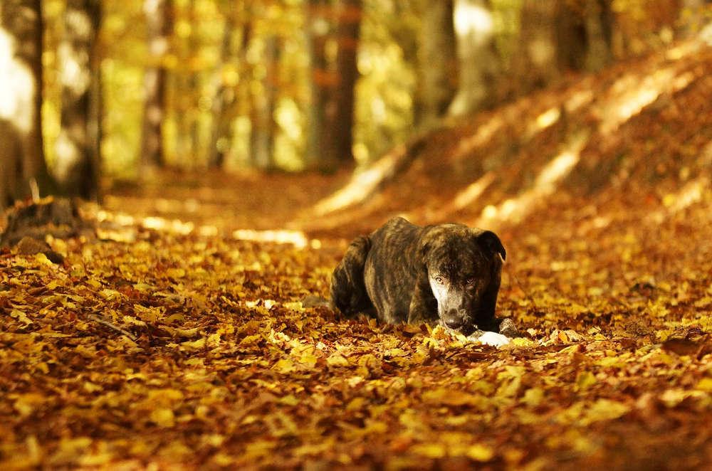 Hund im Herbst /