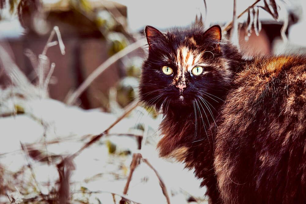 Katze im Winter (Mobile Fotografie)