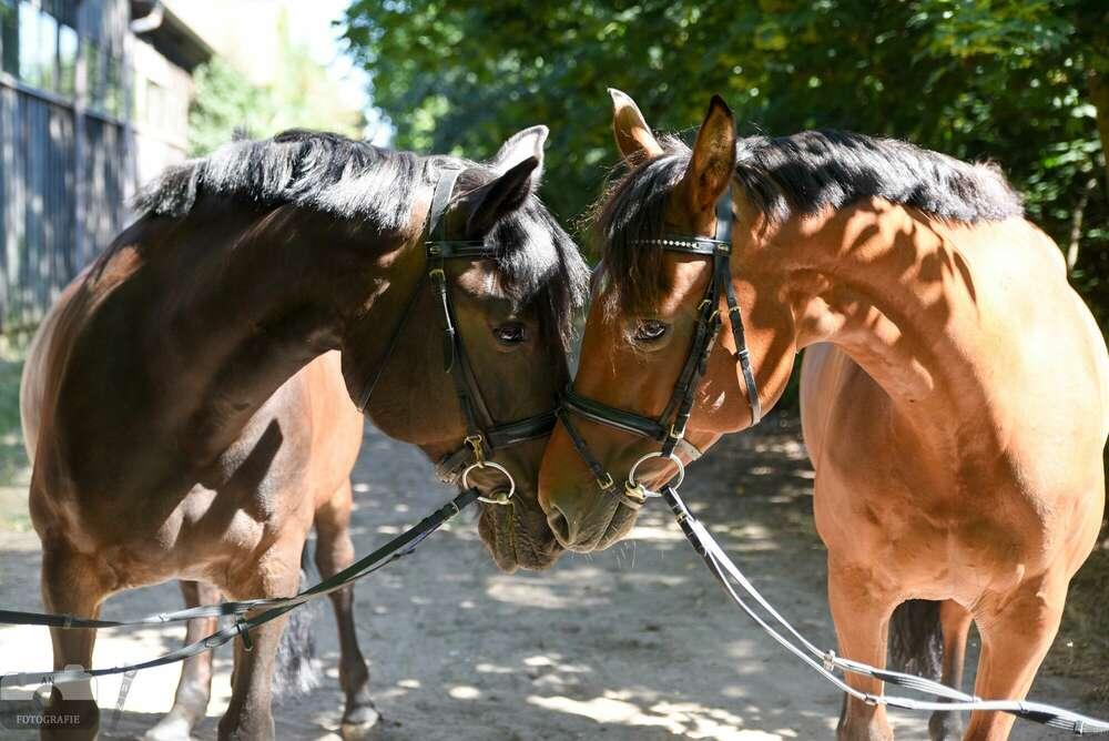 Pferde / Tierliebe (AN Fotografie)