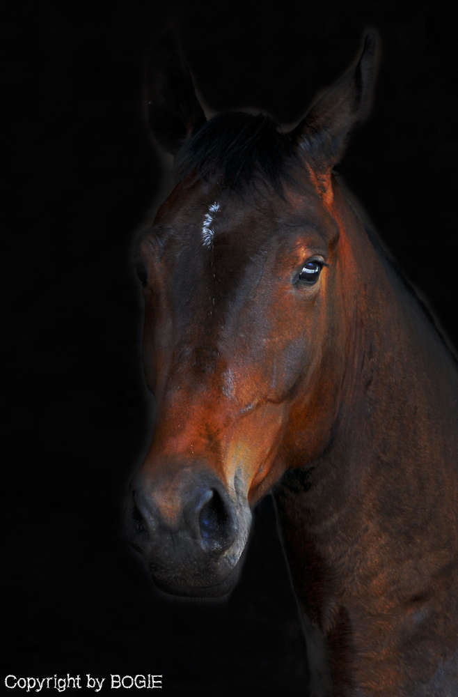 Horses (BOGIE - Photography & Videography)
