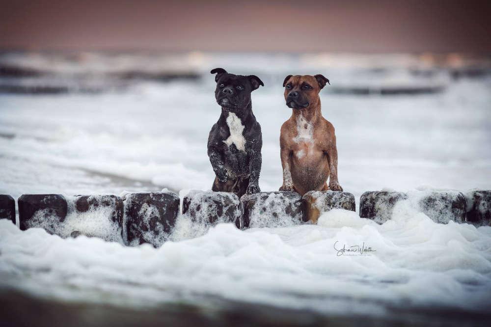 Meerliebe / Sam und Scotty in der Ostsee (Sabrina Wobith Photography - FotosVonMaja)