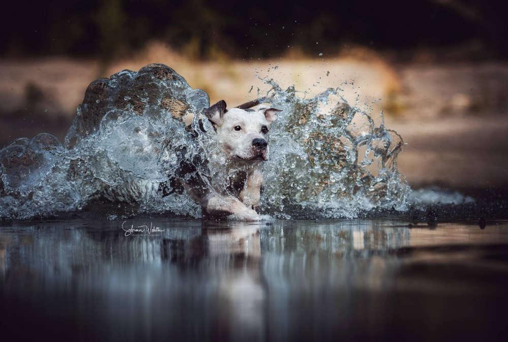 Die Welle / Pie in Aktion (Sabrina Wobith Photography - FotosVonMaja)