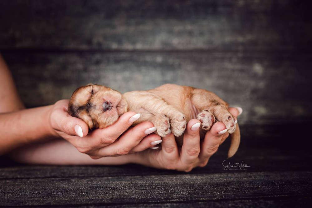 Hand voll Glück (Sabrina Wobith Photography - FotosVonMaja)