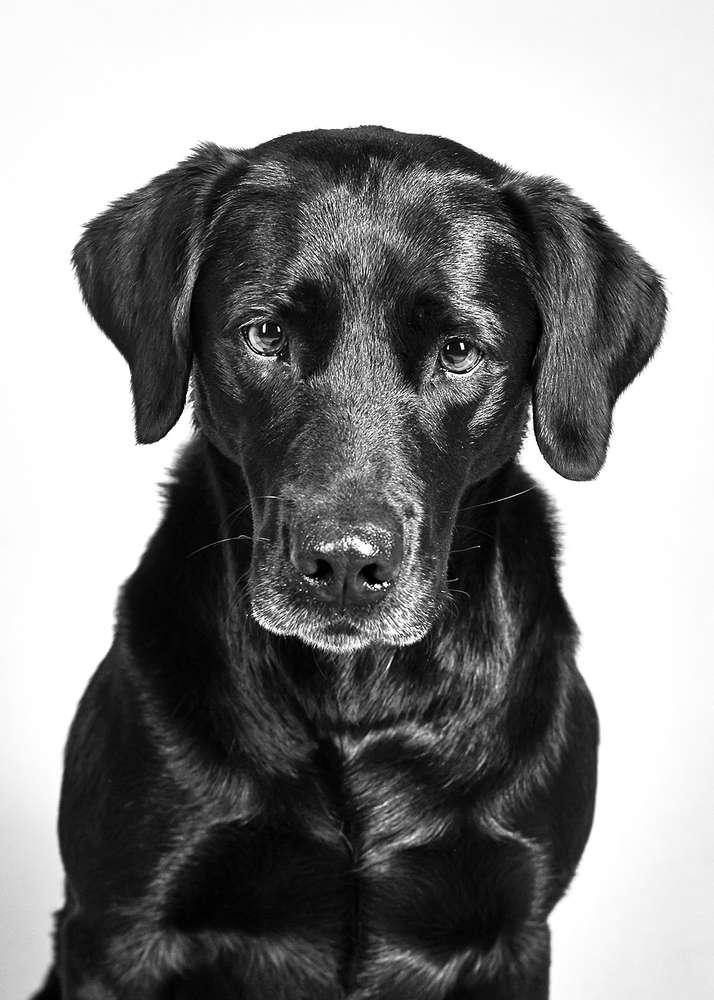 Hundefotografie / Portraitfotografie