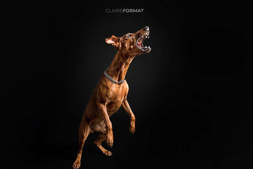 Claireformat Fotografie / Hundeshooting (Claireformat)