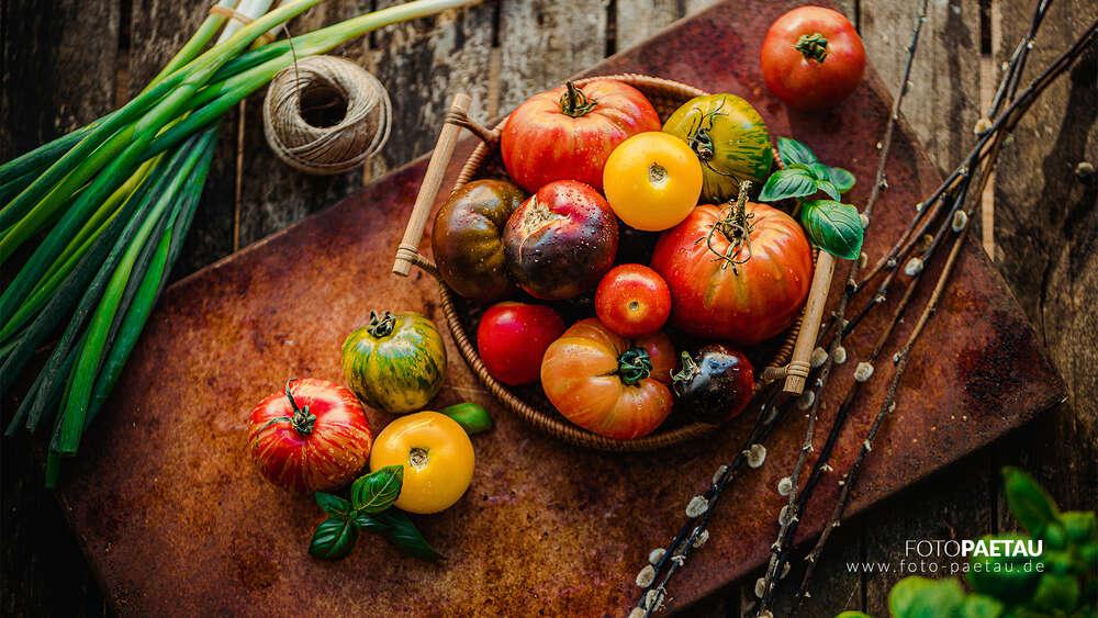 Tomaten (FOTO PAETAU)